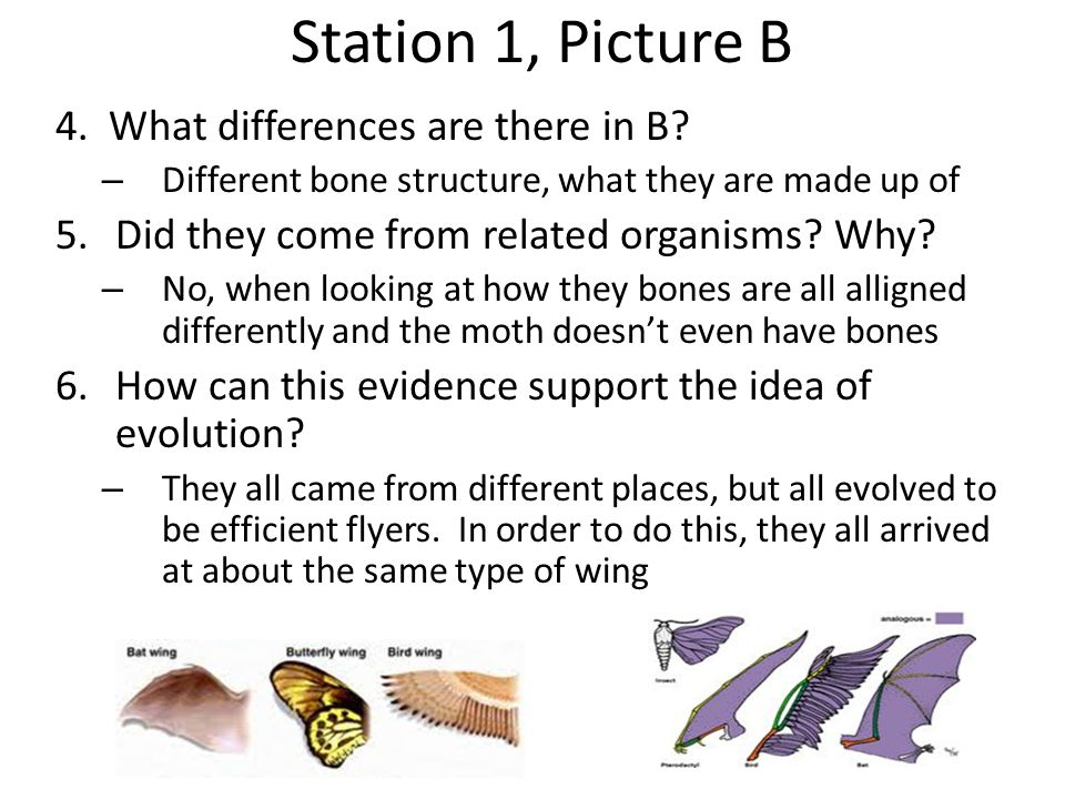 Station 1, Picture B 4. What differences are there in B