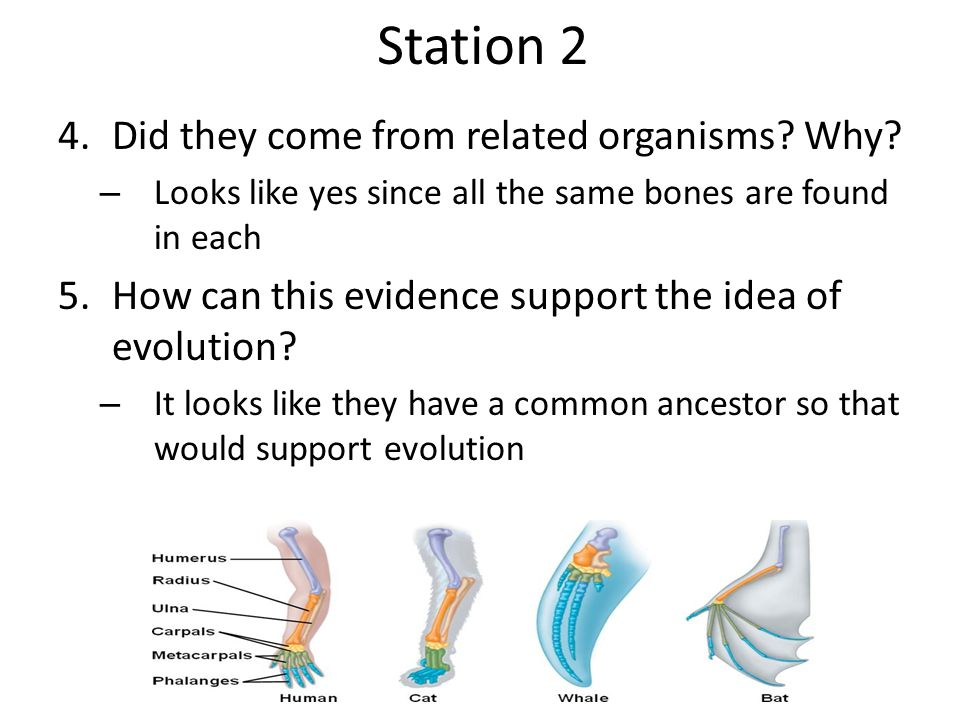 Station 2 Did they come from related organisms Why