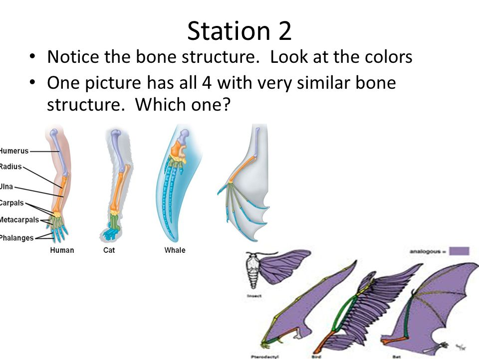 Station 2 Notice the bone structure. Look at the colors