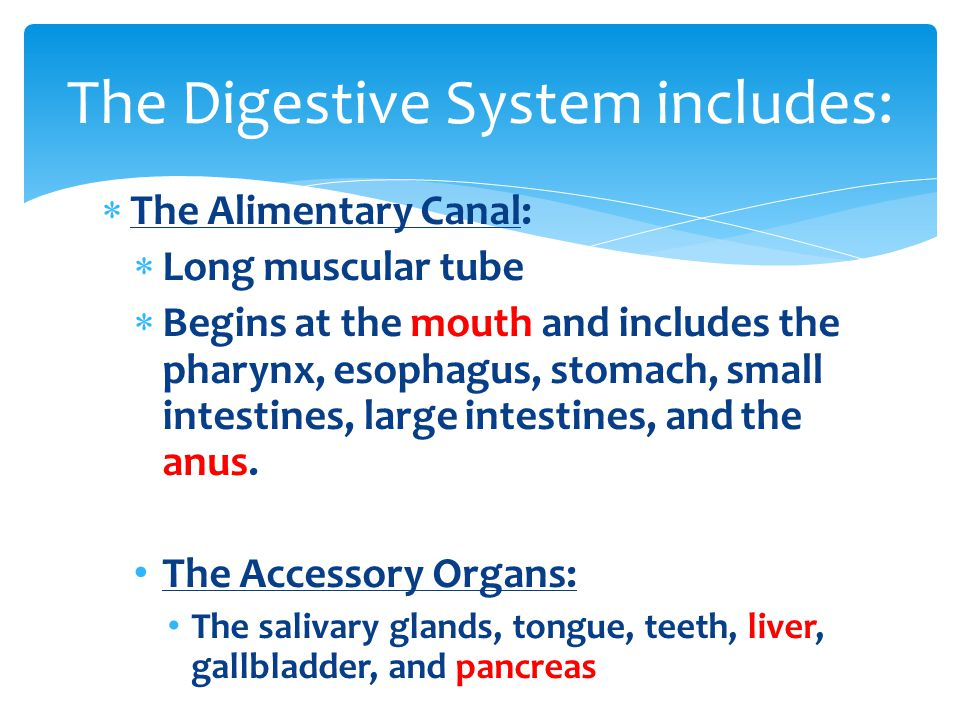 The Digestive System includes: