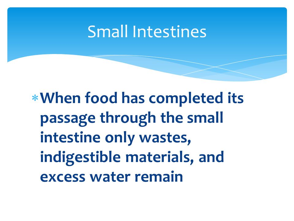 Small Intestines When food has completed its passage through the small intestine only wastes, indigestible materials, and excess water remain.