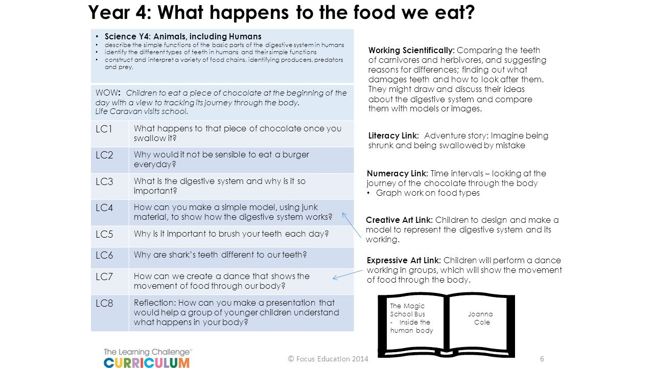 Year 4: What happens to the food we eat