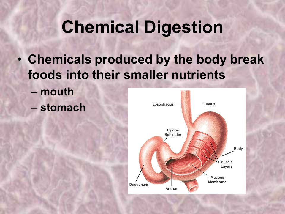 Chemical Digestion Chemicals produced by the body break foods into their smaller nutrients. mouth.