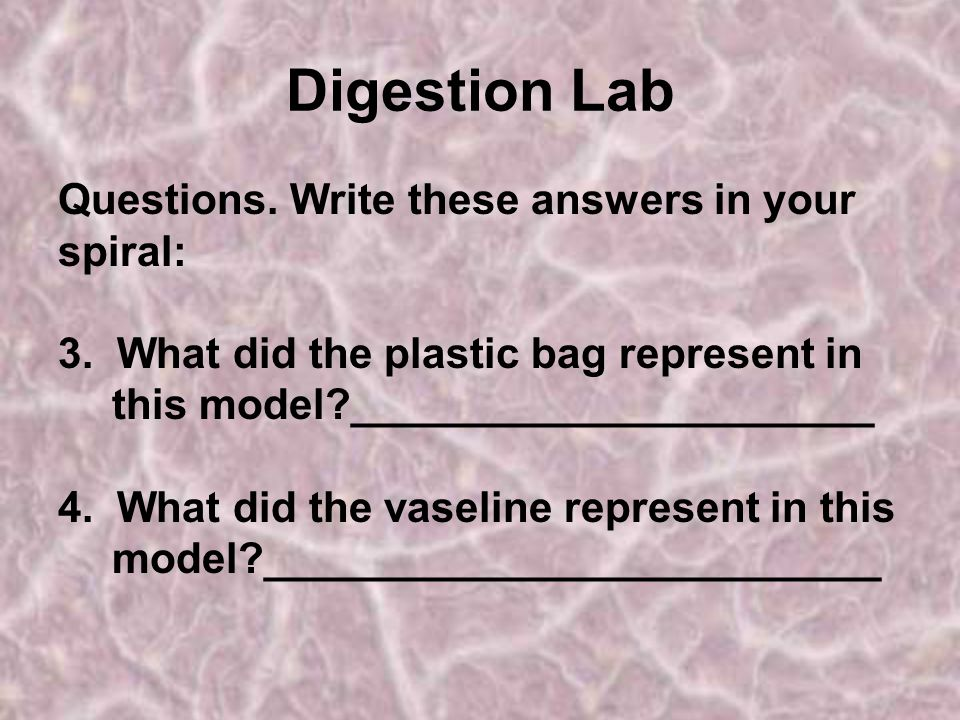 Digestion Lab Questions. Write these answers in your spiral: