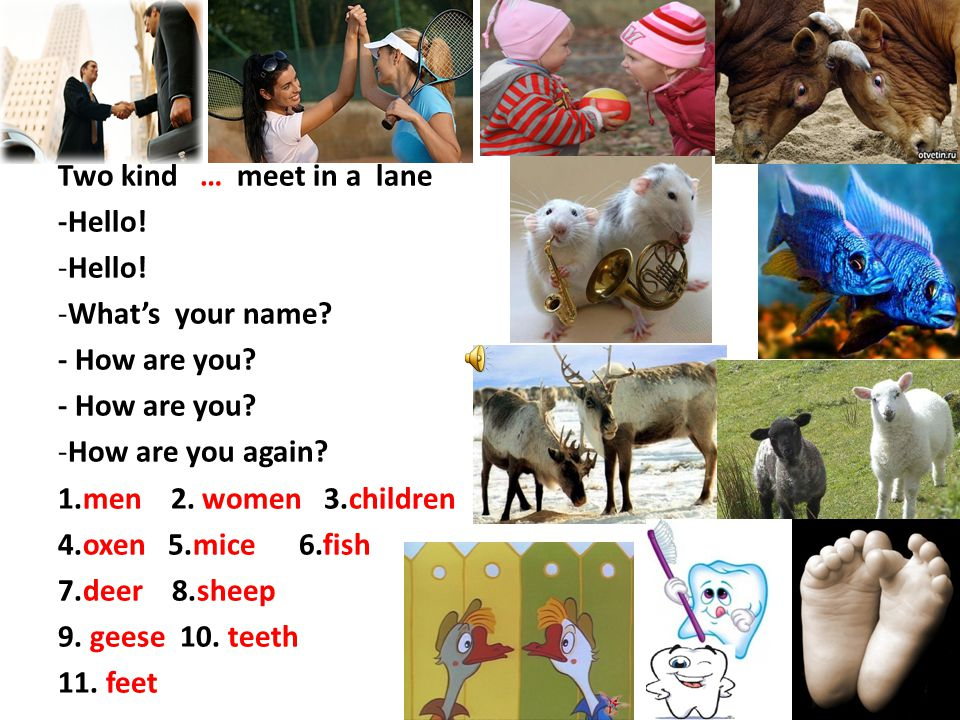 Two kind … meet in a lane -Hello! Hello! What's your name - How are you How are you again