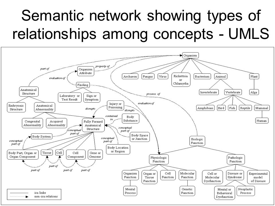 Semantic network showing types of relationships among concepts - UMLS