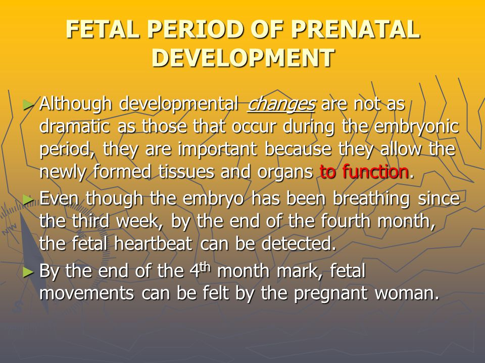 FETAL PERIOD OF PRENATAL DEVELOPMENT