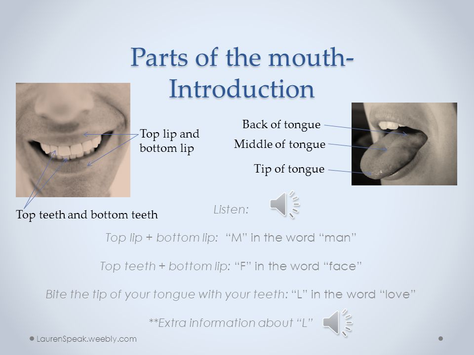 Parts of the mouth- Introduction
