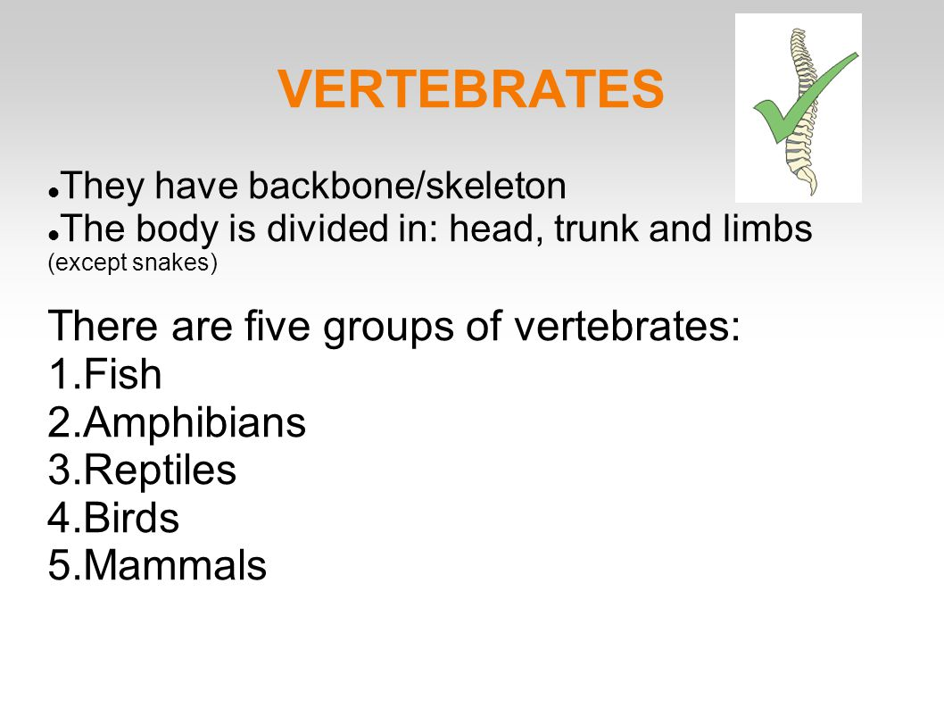 VERTEBRATES There are five groups of vertebrates: Fish Amphibians