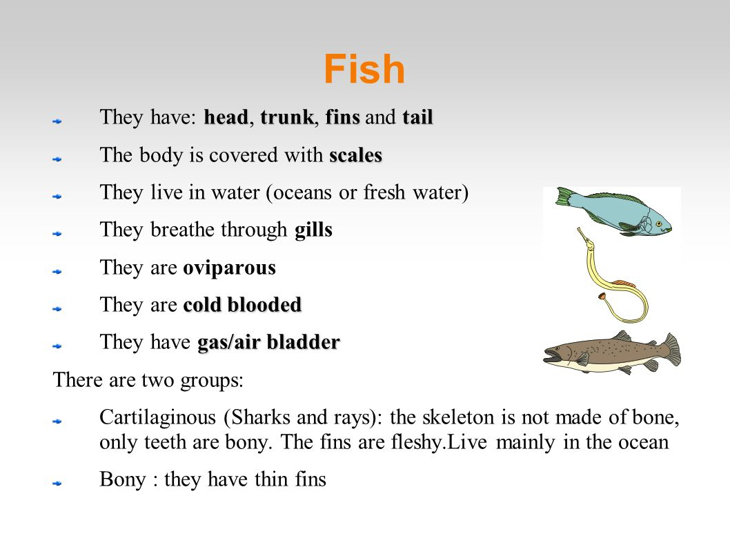 Fish They have: head, trunk, fins and tail