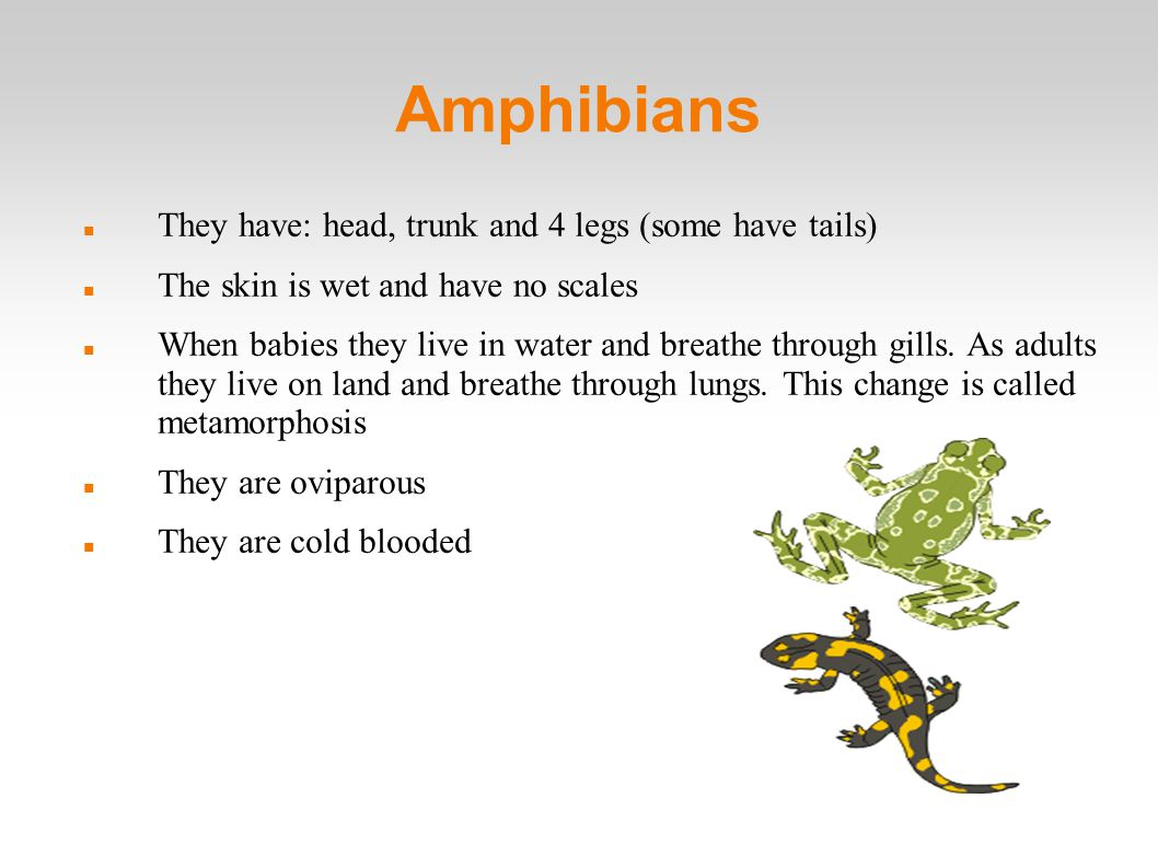 Amphibians They have: head, trunk and 4 legs (some have tails)