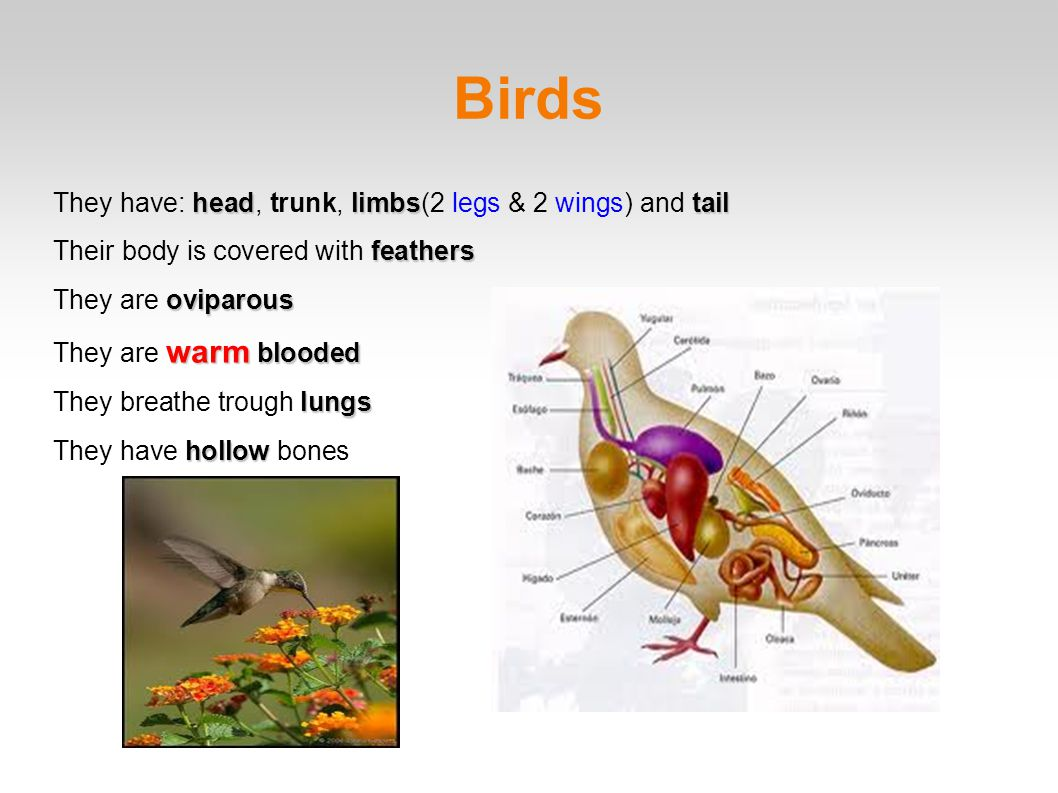 Birds They have: head, trunk, limbs(2 legs & 2 wings) and tail