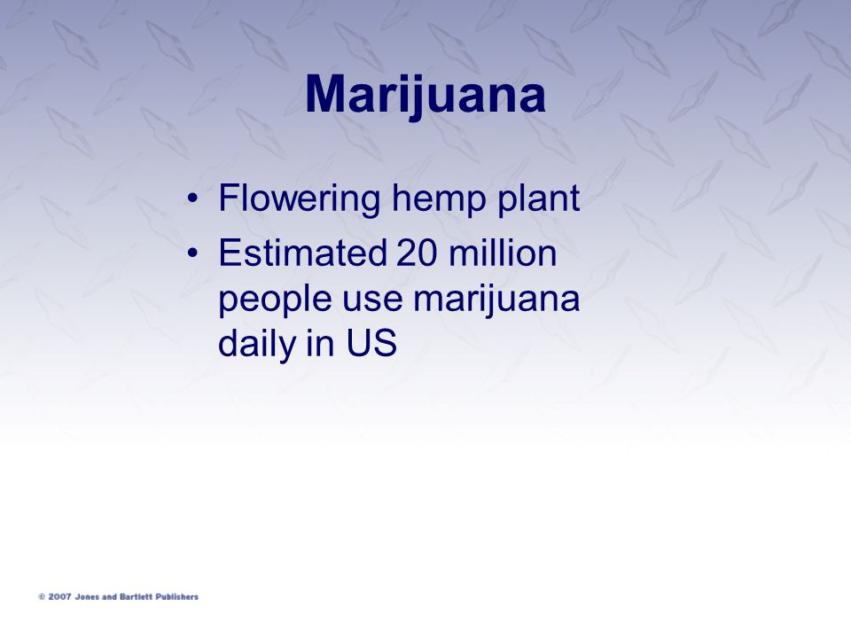 Marijuana Flowering hemp plant
