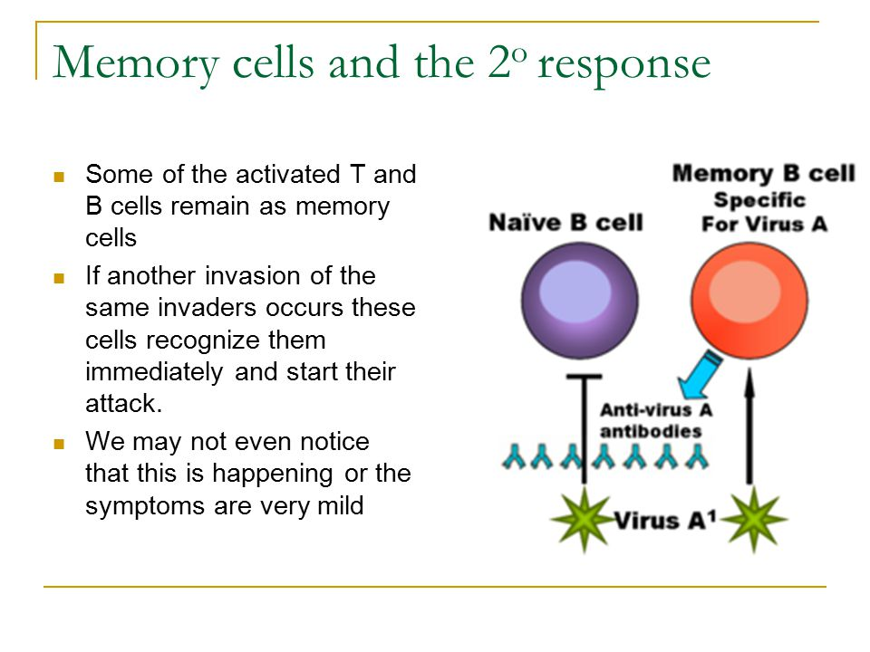 Memory cells and the 2o response