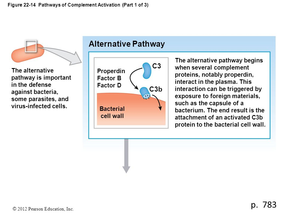 Figure 22-14 Pathways of Complement Activation (Part 1 of 3)