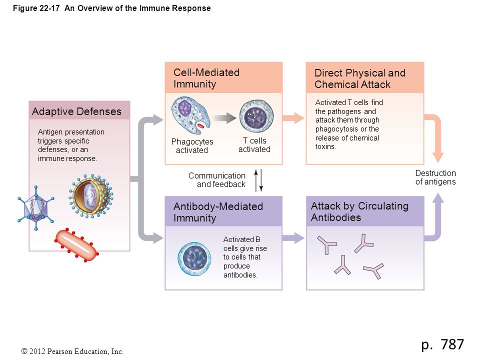 Figure 22-17 An Overview of the Immune Response