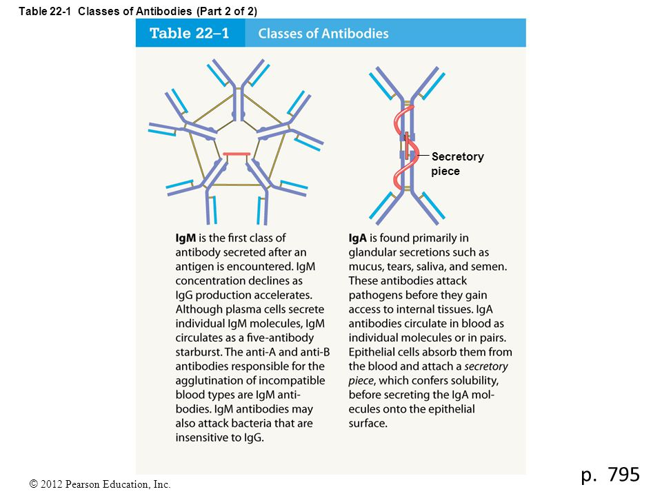 Table 22-1 Classes of Antibodies (Part 2 of 2)