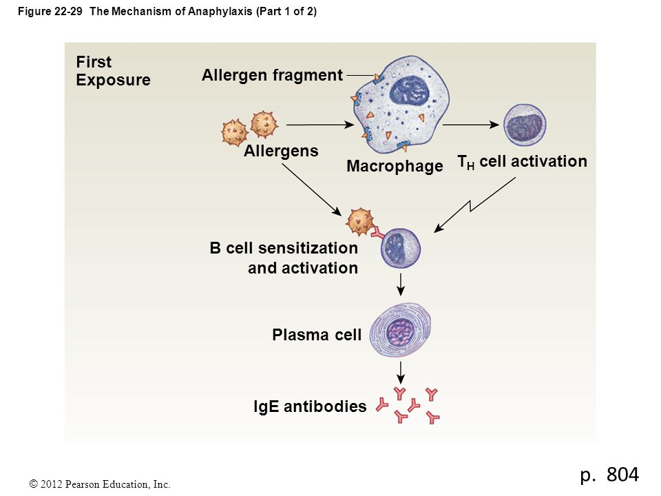 Figure 22-29 The Mechanism of Anaphylaxis (Part 1 of 2)