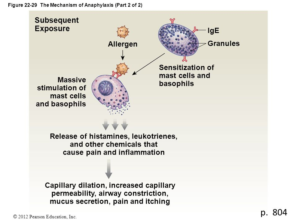 Figure 22-29 The Mechanism of Anaphylaxis (Part 2 of 2)