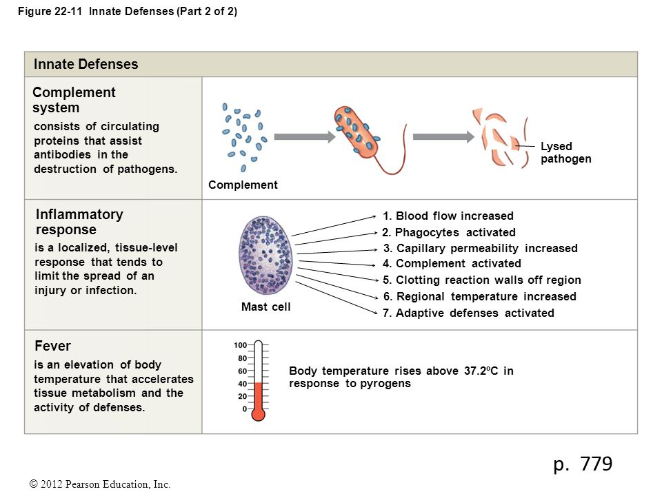 Figure 22-11 Innate Defenses (Part 2 of 2)