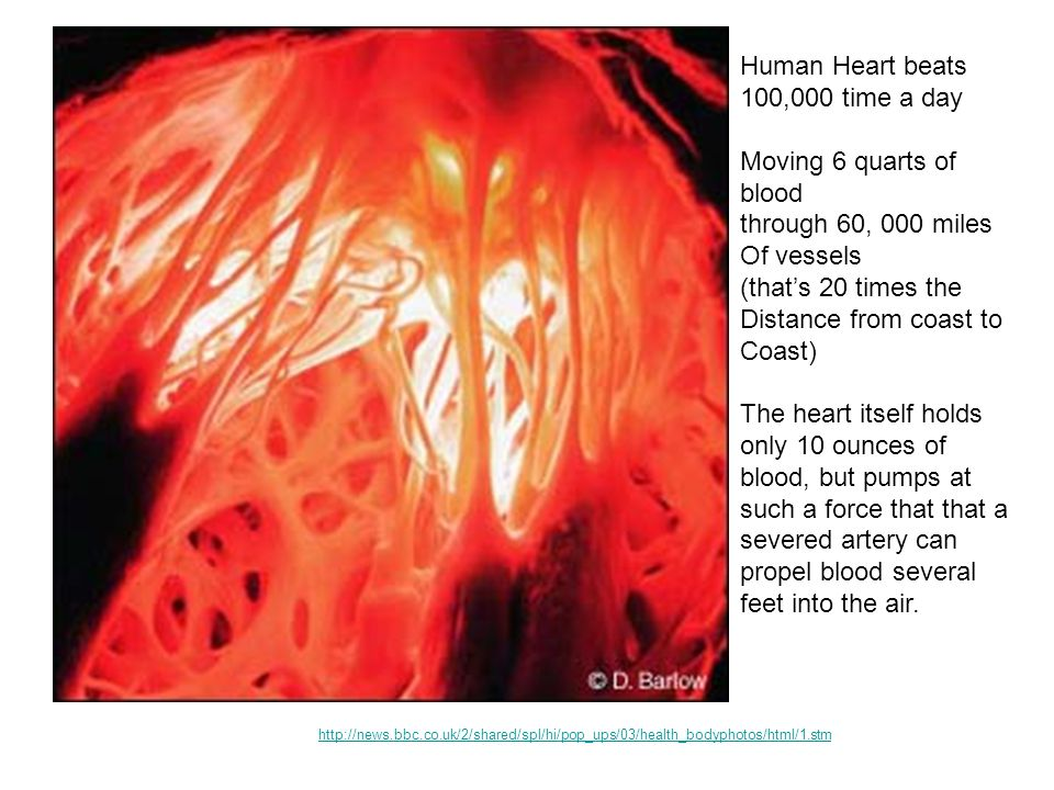 Human Heart beats 100,000 time a day Moving 6 quarts of blood