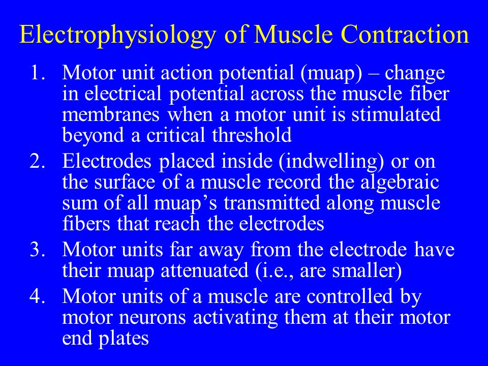 Electrophysiology of Muscle Contraction