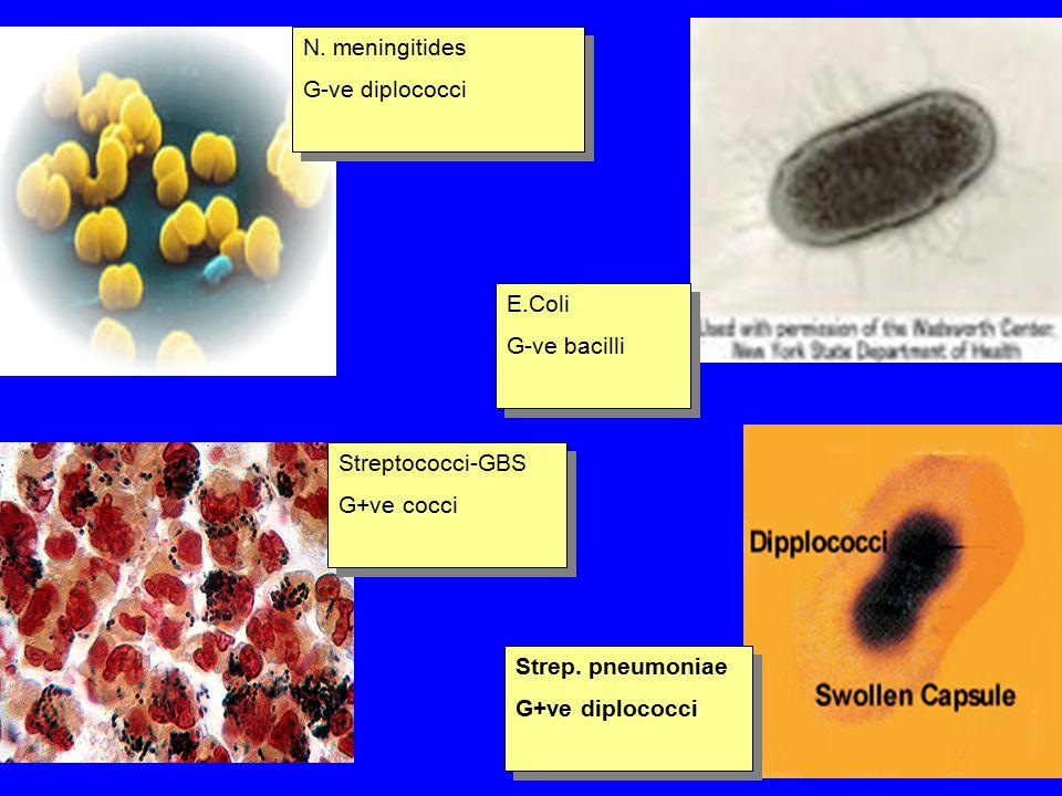 N. meningitides G-ve diplococci E.Coli G-ve bacilli Streptococci-GBS