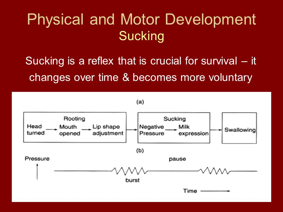 Physical and Motor Development Sucking