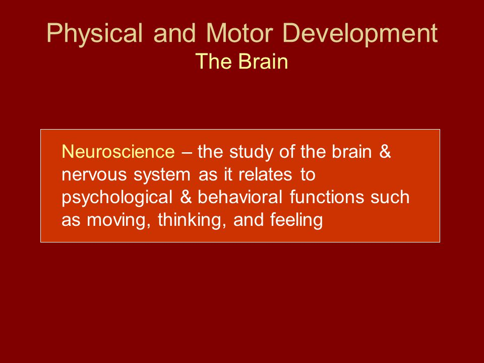 Physical and Motor Development The Brain
