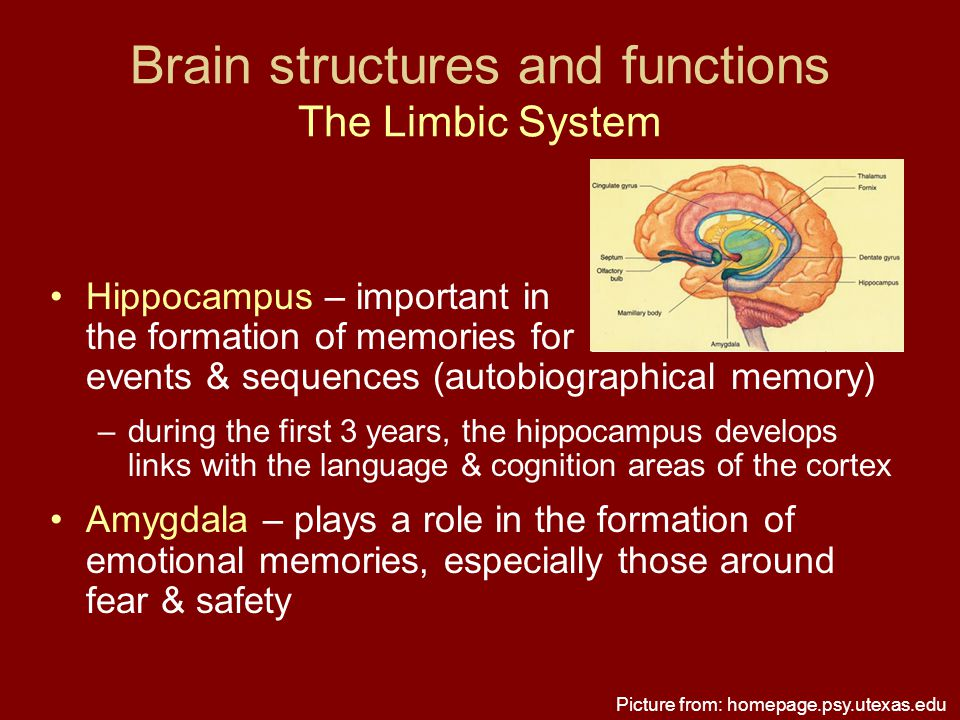 Brain structures and functions The Limbic System