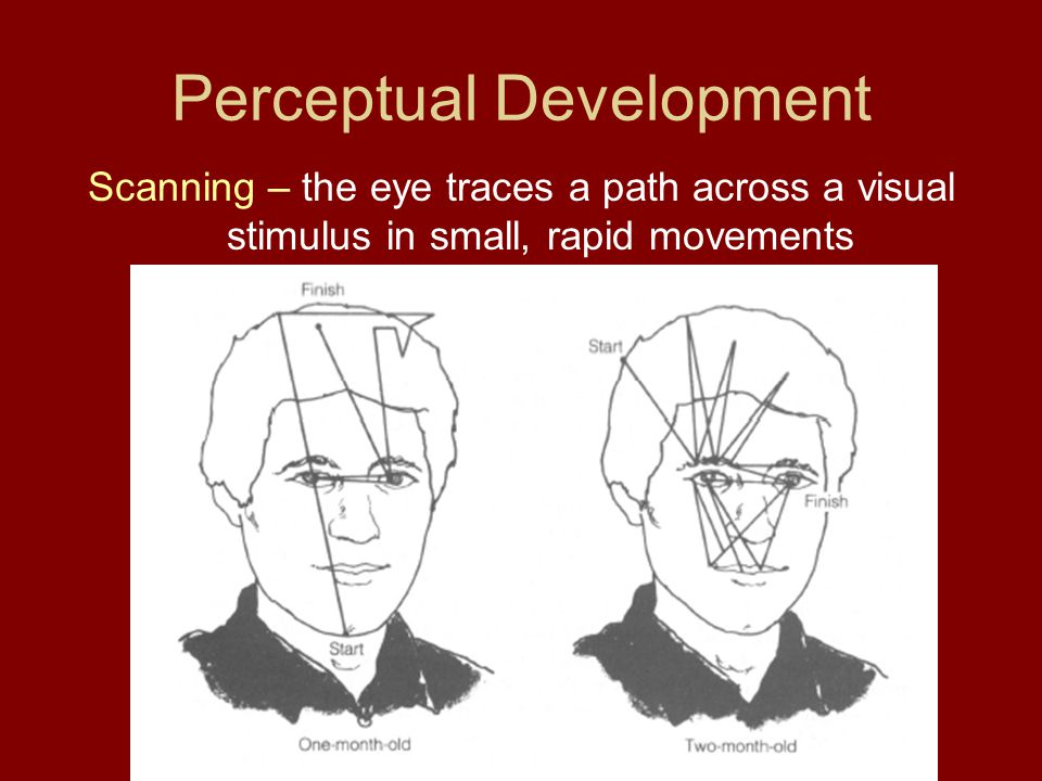 Perceptual Development