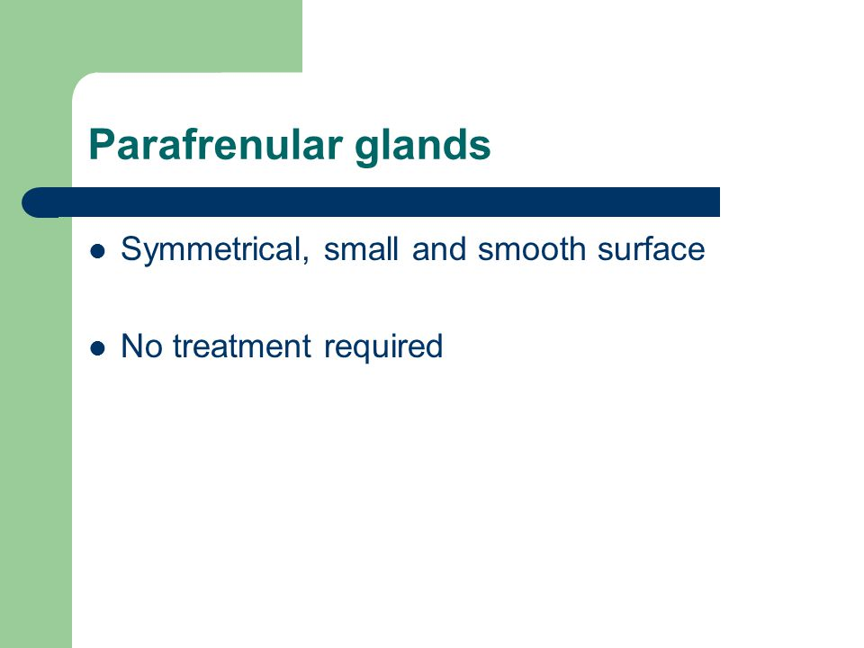Parafrenular glands Symmetrical, small and smooth surface