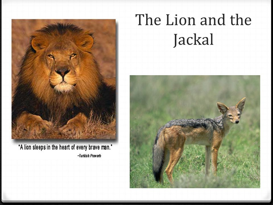 The Lion and the Jackal