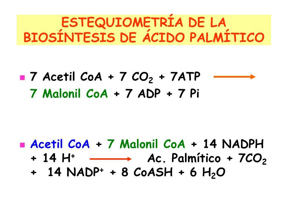 ESTEQUIOMETRÍA DE LA BIOSÍNTESIS DE ÁCIDO PALMÍTICO