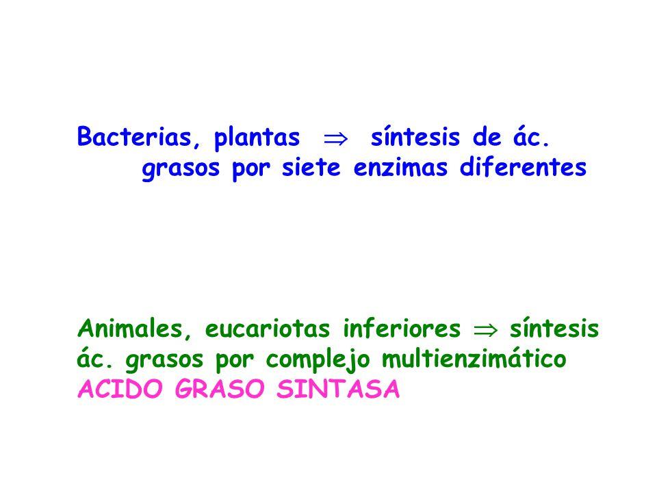 Bacterias, plantas  síntesis de ác