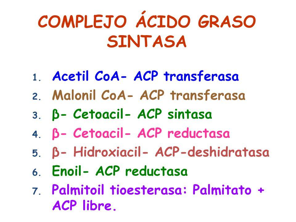COMPLEJO ÁCIDO GRASO SINTASA