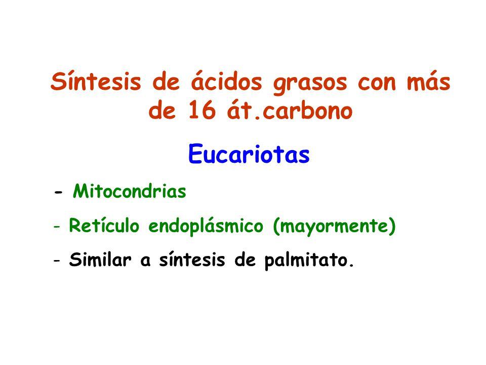 Síntesis de ácidos grasos con más de 16 át.carbono