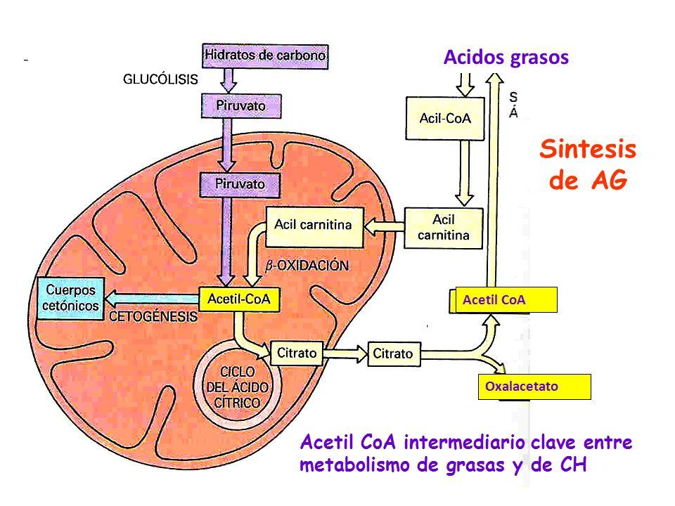 Sintesis de AG Acidos grasos