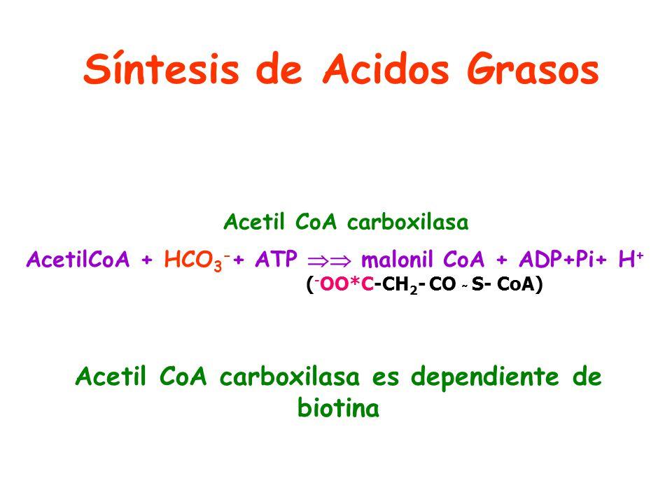 Síntesis de Acidos Grasos
