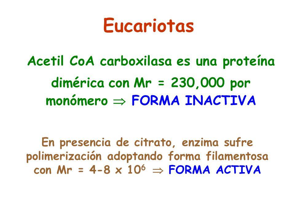 Eucariotas Acetil CoA carboxilasa es una proteína dimérica con Mr = 230,000 por monómero  FORMA INACTIVA.