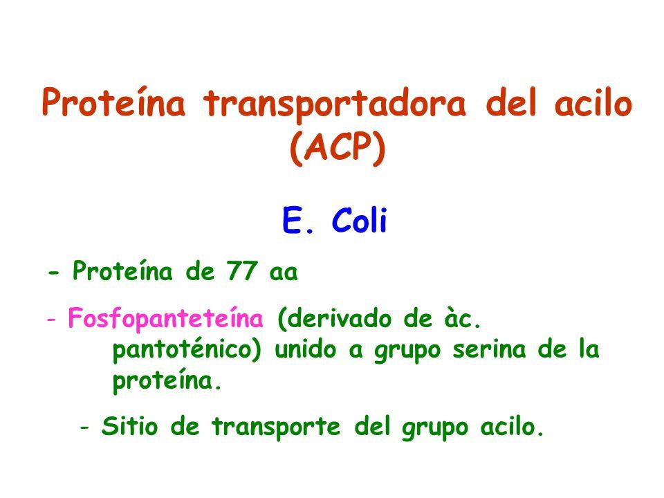 Proteína transportadora del acilo (ACP)