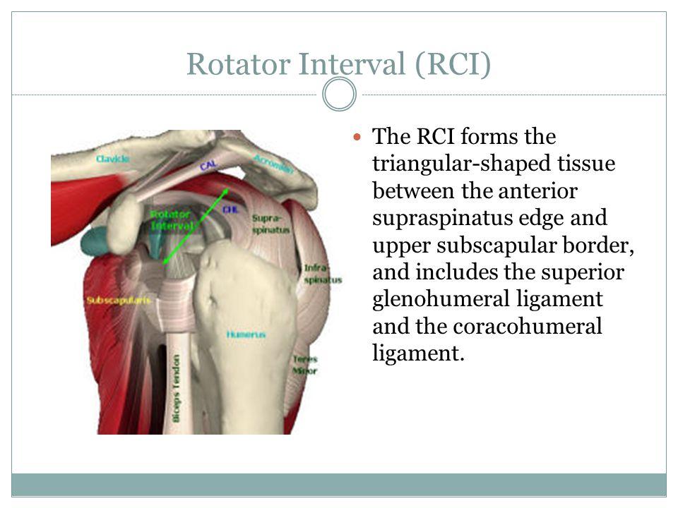 Rotator Interval (RCI)