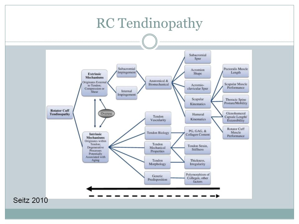 RC Tendinopathy Seitz 2010