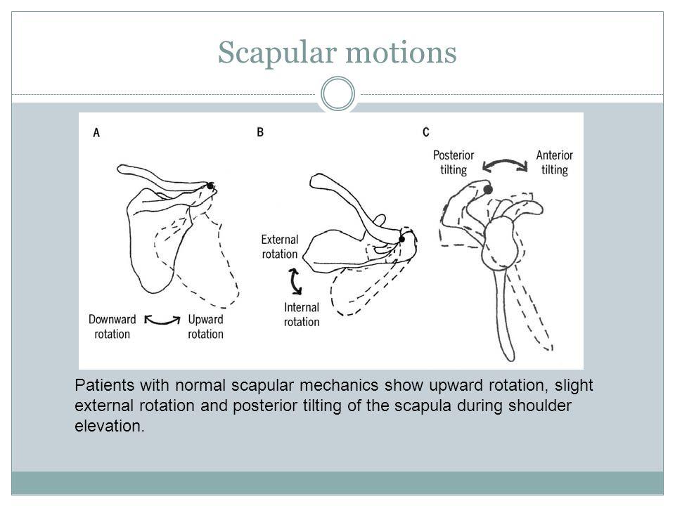 Scapular motions