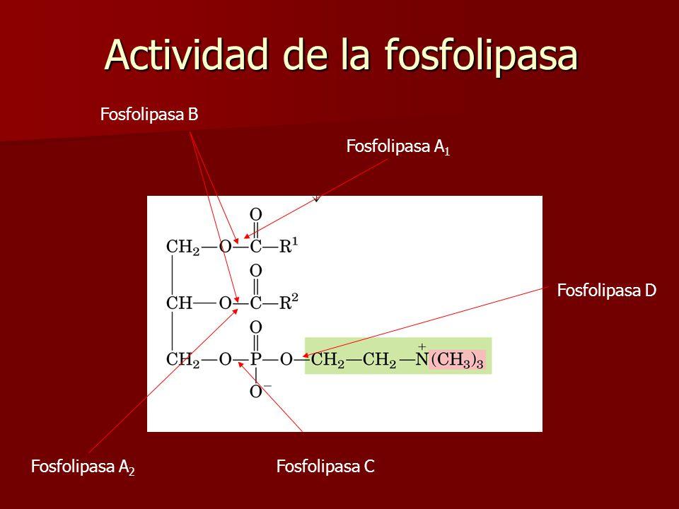 Actividad de la fosfolipasa