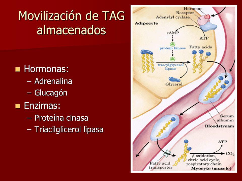 Movilización de TAG almacenados