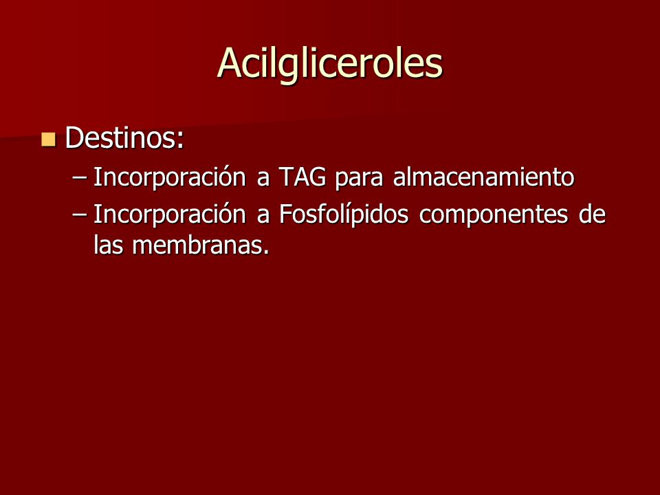 Acilgliceroles Destinos: Incorporación a TAG para almacenamiento