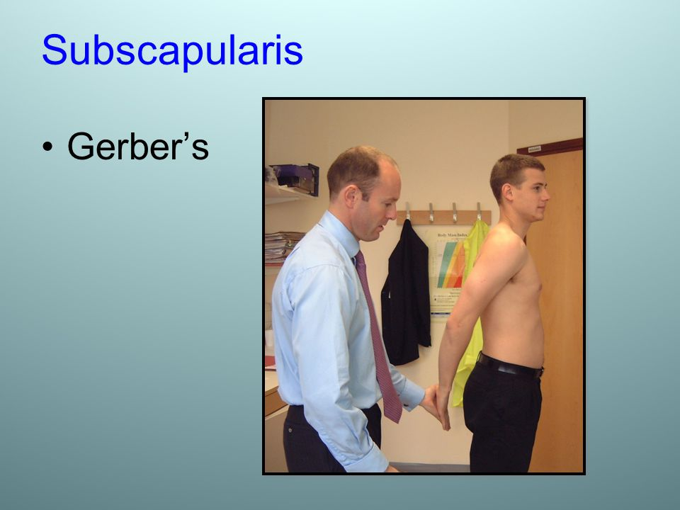 Subscapularis Gerber's