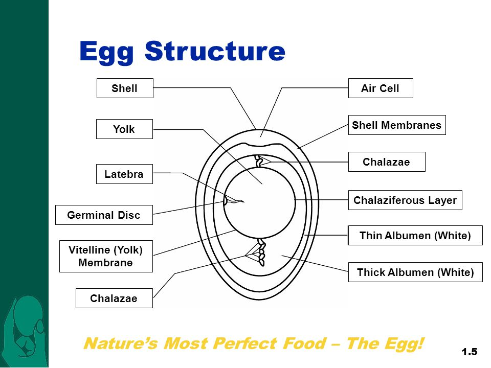Nature's Most Perfect Food – The Egg!