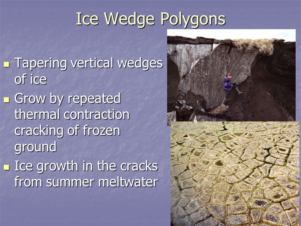 Ice Wedge Polygons Tapering vertical wedges of ice